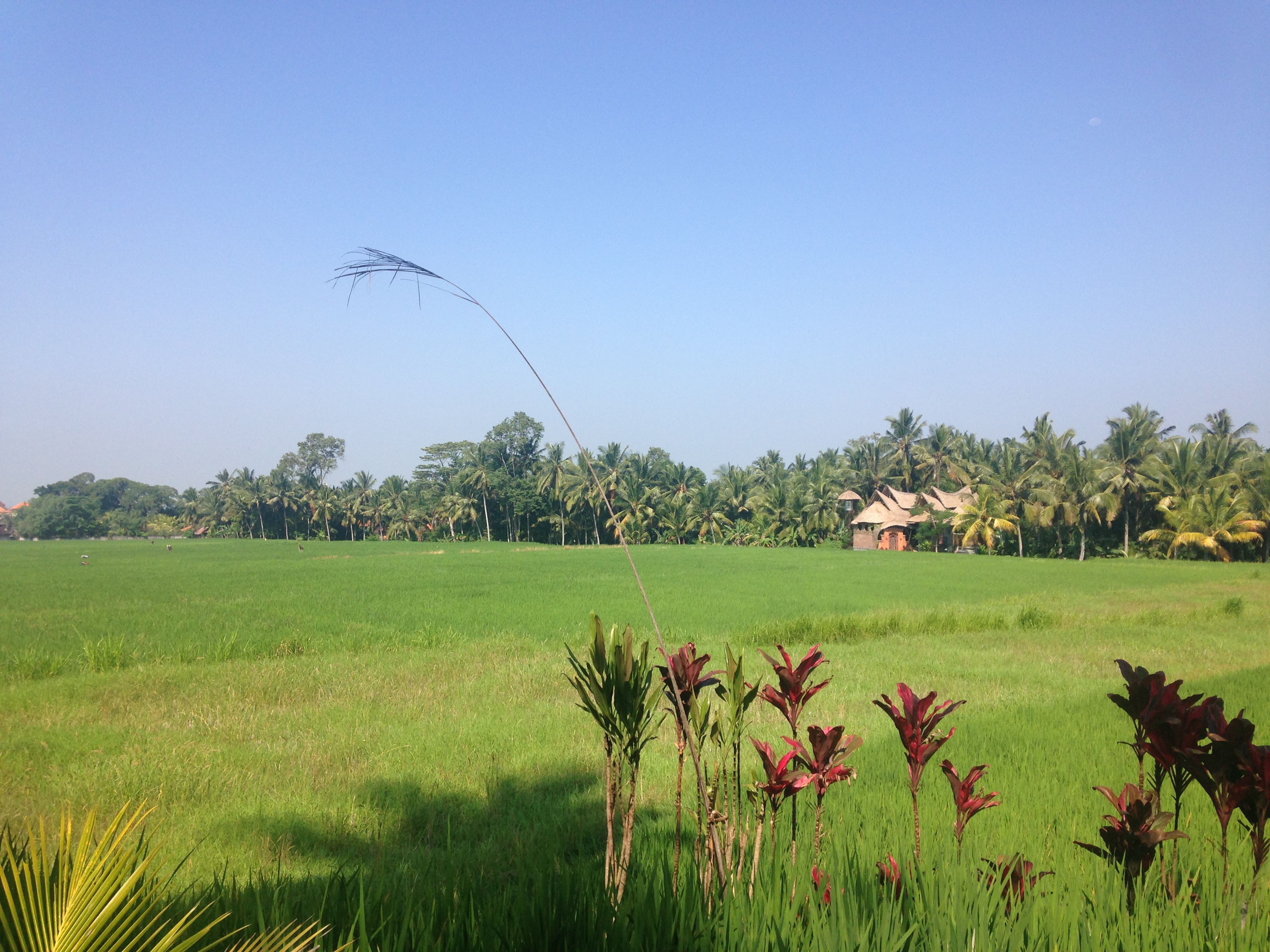Bali, beginning in Ubud